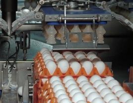 Header handling-carousel for egg transport with Stober servodrives